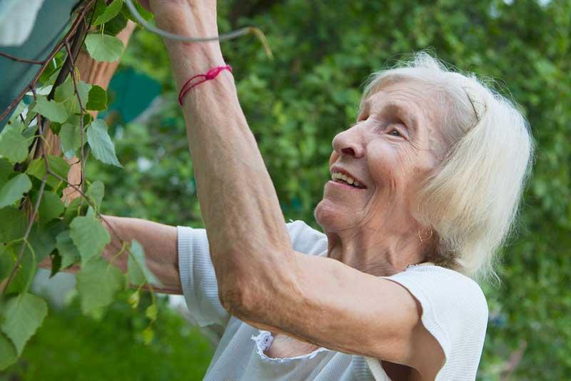 Rimedi della nonna contro le zanzare